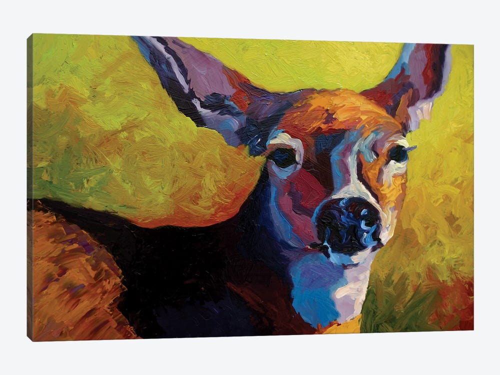 Doe Look by Marion Rose 1-piece Canvas Art