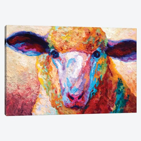 Dorset Ewe Canvas Print #MRS40} by Marion Rose Canvas Art Print