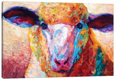 Dorset Ewe Canvas Art Print