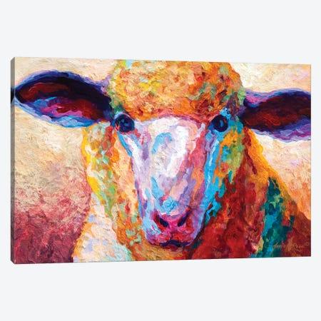Dorset Ewe Canvas Print #MRS40} by Marion Rose Canvas Art Print