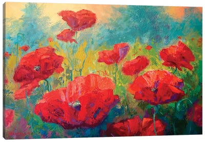 Field Of Poppies I Canvas Art Print