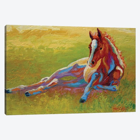 Foal Lying Canvas Print #MRS45} by Marion Rose Canvas Art