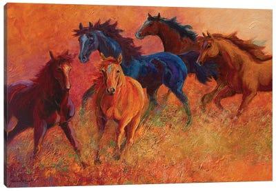 Free Range Horses Canvas Art Print