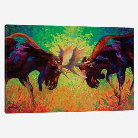 Just Sparring Moose Canvas Print #MRS53} by Marion Rose Canvas Artwork