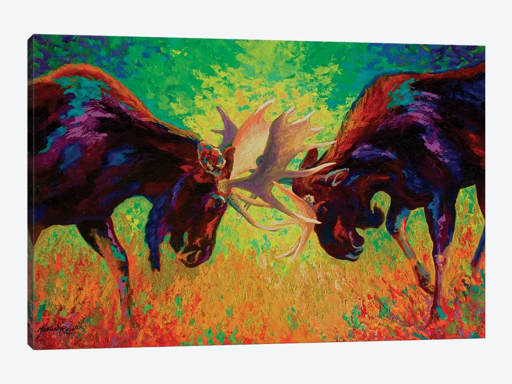 Just Sparring Moose by Marion Rose 1-piece Canvas Art