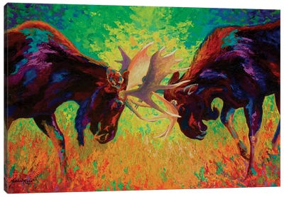 Just Sparring Moose Canvas Art Print