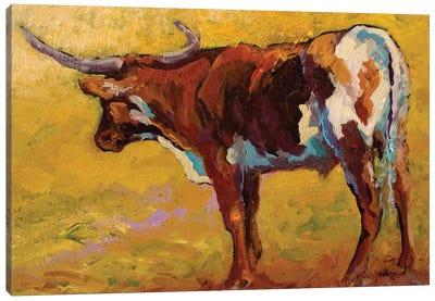 Longhorn Portrait, Back Canvas Art Print