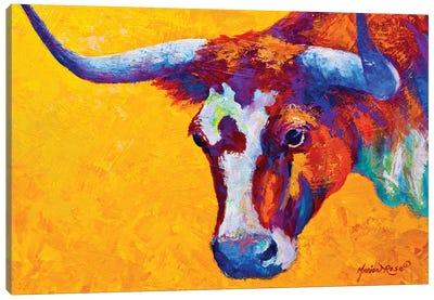 Longhorn Portrait Canvas Art Print
