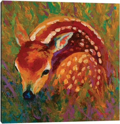 New Fawn Canvas Art Print