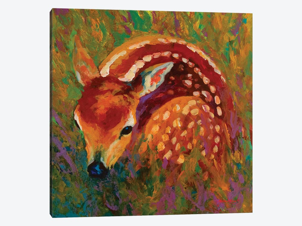 New Fawn by Marion Rose 1-piece Canvas Print