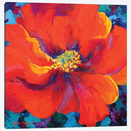 Passion Poppy Canvas Print #MRS65} by Marion Rose Canvas Artwork