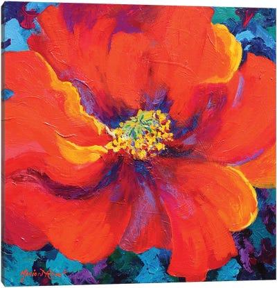 Passion Poppy Canvas Art Print