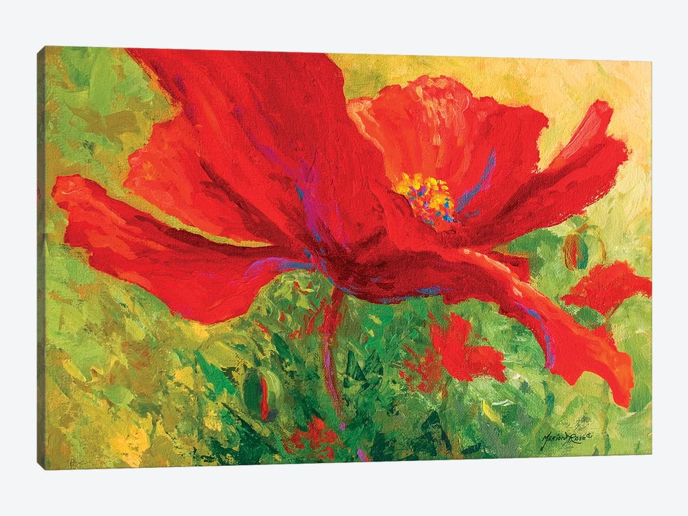 Red Poppy I by Marion Rose 1-piece Canvas Artwork