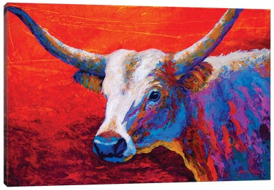 Sunset Ablaze Longhorn Canvas Art Print