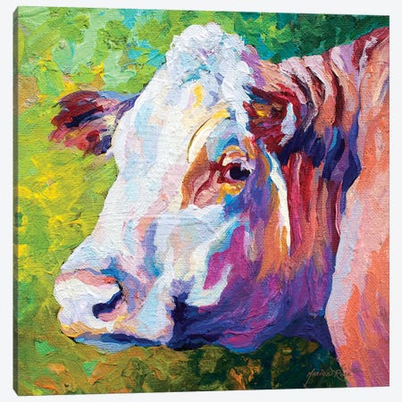 White Face Cow Canvas Print #MRS95} by Marion Rose Art Print