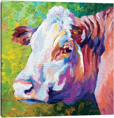 White Face Cow Canvas Art Print