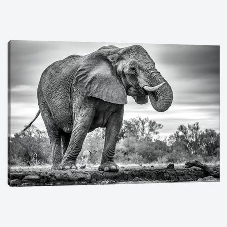 Standing Proud Canvas Print #MRX3} by Jaco Marx Canvas Art Print