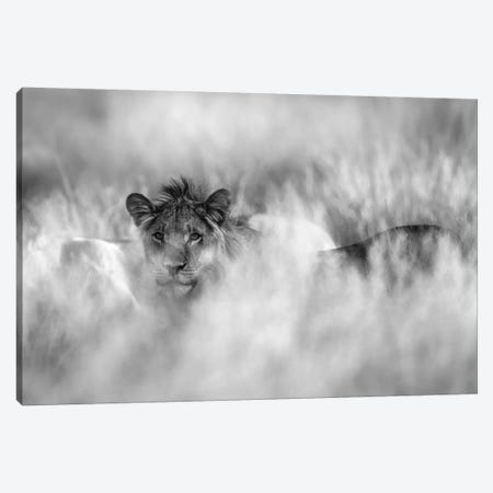 Subtle Mane Canvas Print #MRX7} by Jaco Marx Canvas Wall Art