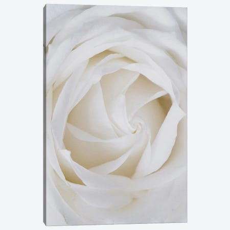 Roses White Canvas Print #MSD129} by Mambo Art Studio Canvas Print