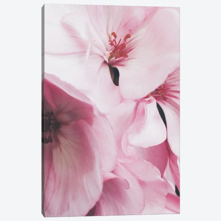 Pink Flowers Photo Canvas Print #MSD79} by Mambo Art Studio Canvas Art