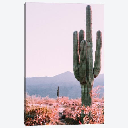 Desert Cactus Canvas Print #MSD82} by Mambo Art Studio Canvas Art Print