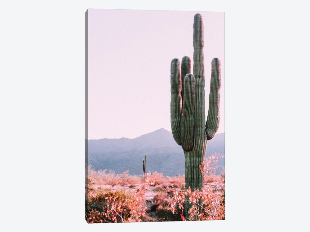 Desert Cactus by Mambo Art Studio 1-piece Canvas Wall Art