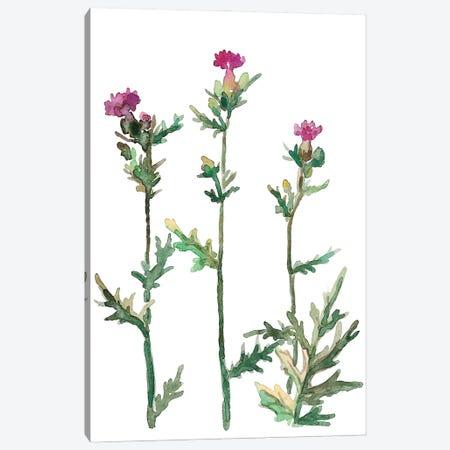 Flower Thistle Canvas Print #MSG63} by Maryna Salagub Canvas Art