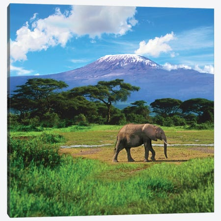 A Lone African Elephant With Mount Kilimanjaro In The Background, Amboseli National Park, Kenya Canvas Print #MST1} by Miva Stock Canvas Art
