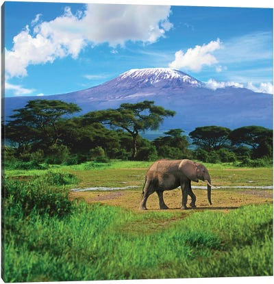 A Lone African Elephant With Mount Kilimanjaro In The Background, Amboseli National Park, Kenya Canvas Art Print