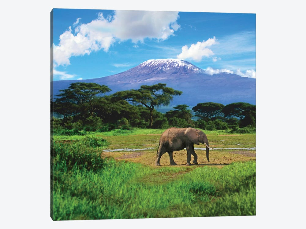 A Lone African Elephant With Mount Kilimanjaro In The Background, Amboseli National Park, Kenya by Miva Stock 1-piece Canvas Art