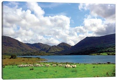 Sheep Near A Small Lake In The Gap Of Dunloe, Killarney National Park, Ireland Canvas Art Print