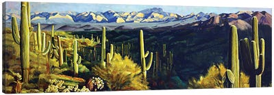 Sonoran Desert Canvas Art Print