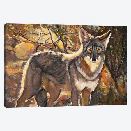 Desert Coyote Canvas Print #MSV34} by M & E Stoyanov Fine Art Studio Art Print