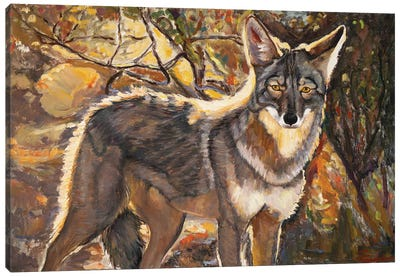 Desert Coyote Canvas Art Print