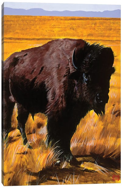 Buffalo Land Canvas Art Print