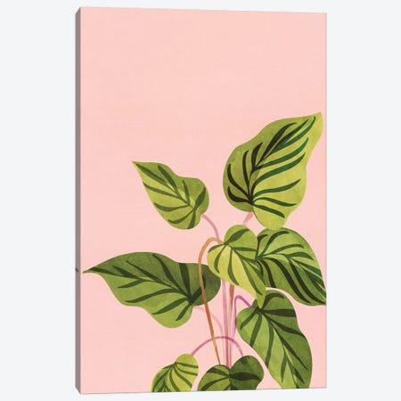 Tropical Rising Canvas Print #MTP130} by Modern Tropical Canvas Wall Art