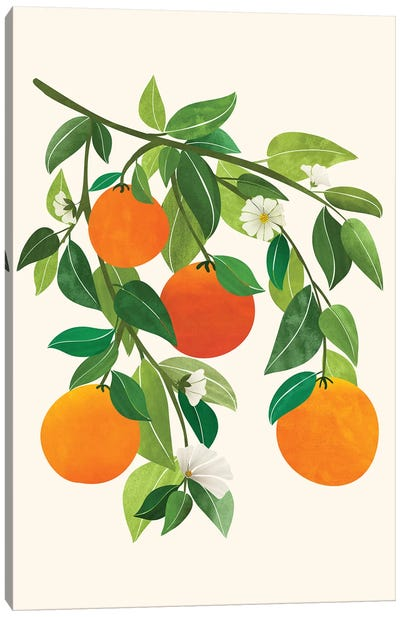 Oranges And Blossoms Ii Canvas Art Print