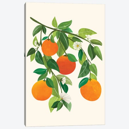 Oranges And Blossoms Ii Canvas Print #MTP153} by Modern Tropical Canvas Artwork