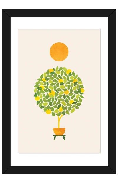 Sunshine And Lemon Tree Framed Art Print