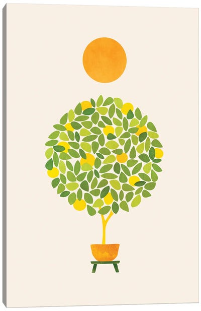 Sunshine And Lemon Tree Canvas Art Print