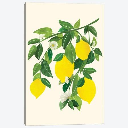 Sunny Lemons Canvas Print #MTP217} by Modern Tropical Canvas Wall Art