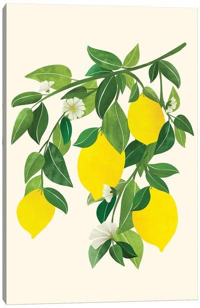 Sunny Lemons Canvas Art Print