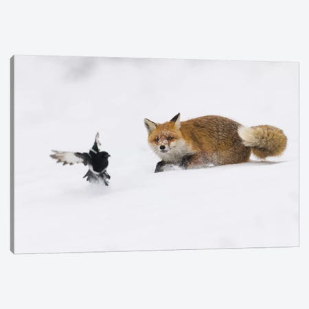 Snow Fox IV Canvas Print #MTS100} by Martin Steenhaut Art Print