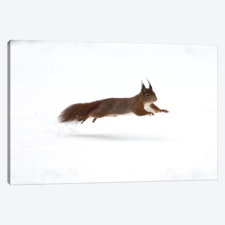 Squirrel Jump Canvas Print #MTS104} by Martin Steenhaut Canvas Wall Art