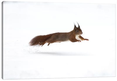 Squirrel Jump Canvas Art Print