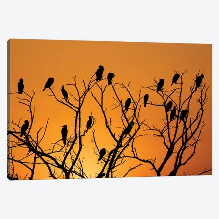 Sunset Cormorant Colony Canvas Print #MTS107} by Martin Steenhaut Canvas Artwork