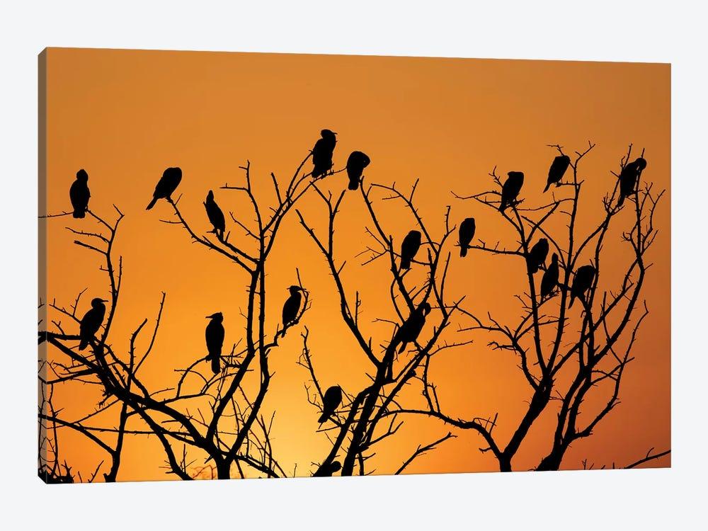 Sunset Cormorant Colony by Martin Steenhaut 1-piece Canvas Wall Art