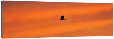Sunset Flight Canvas Art Print