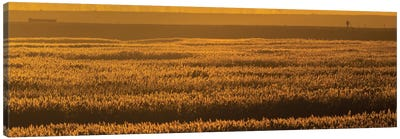 Sunset Reed Canvas Art Print