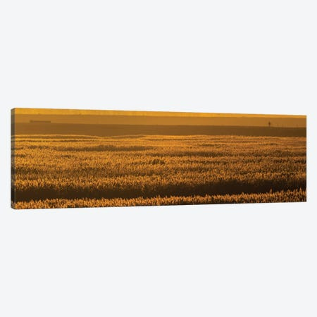 Sunset Reed Canvas Print #MTS109} by Martin Steenhaut Canvas Print